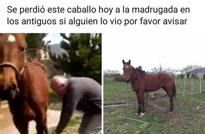 los antiguos caballo2