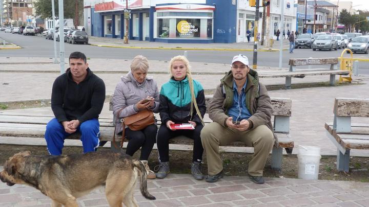 perros (3)